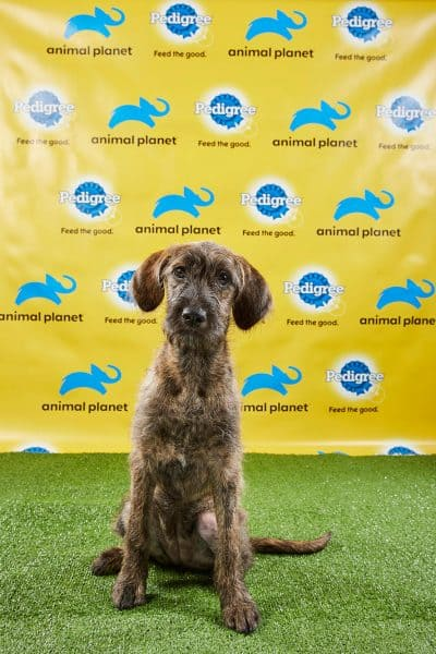 Costa Rican puppy stars in Puppy Bowl XV – The Tico Times | Costa Rica News | Travel | Real Estate